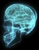 brain-small